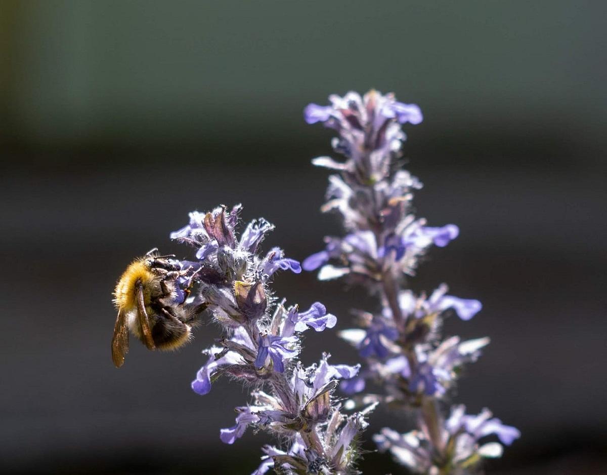poszméh virágon mondolo egyesület